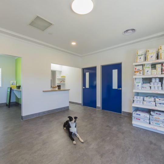 Reception & Veterinary Grade Pet Supplies