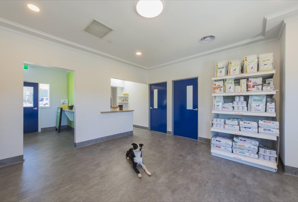 Spring Gully Animal Hospital - A modern veterinary clinic in Bendigo - Clinic Internal Photo 2