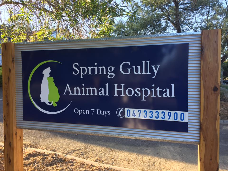 Spring-Gully-Animal-Hospital-Sign.jpg